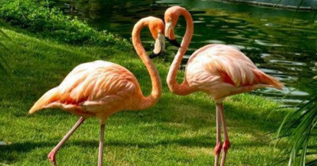 Αληθινή αγάπη! Το μεγαλείο της φύσης μας χαρίζει στιγμές αληθινής αγάπης.