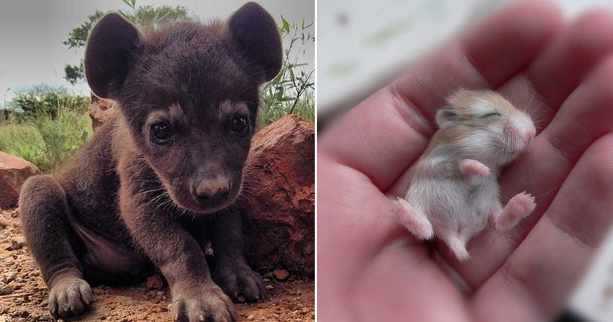 20 ζώα που δεν τα έχετε ξαναδεί σε μικρή ηλικία!