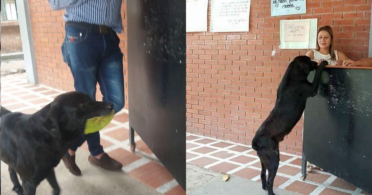 Σκύλος είδε φοιτητή να αγοράζει φαγητό με λεφτά και έκανε το ίδιο αλλά με φύλλα δέντρων