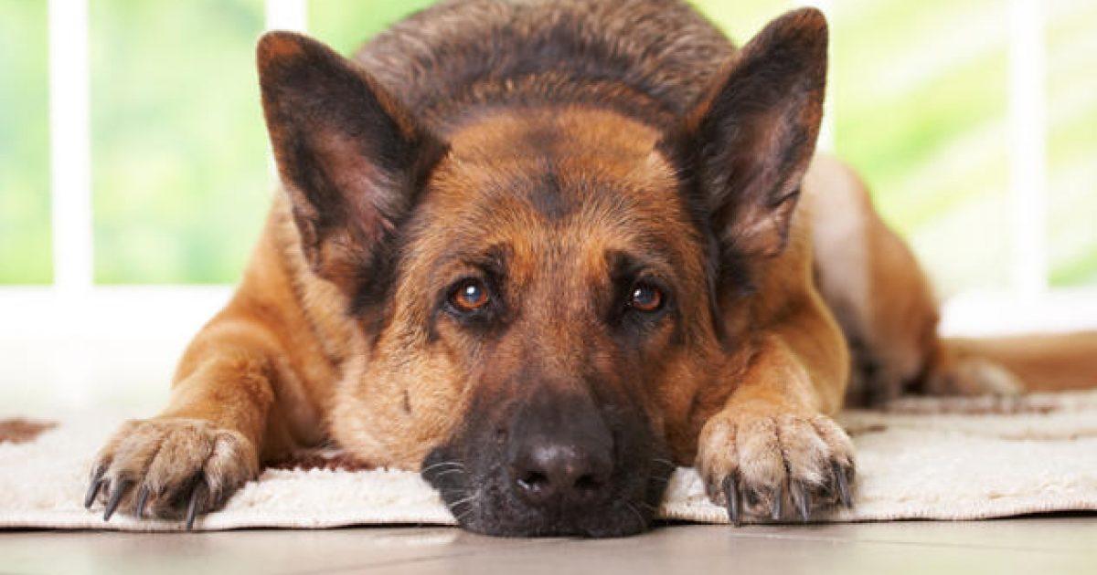 20 πράγματα που δεν πρέπει ποτέ να ξεχνάμε όσοι αγαπάμε τα σκυλιά