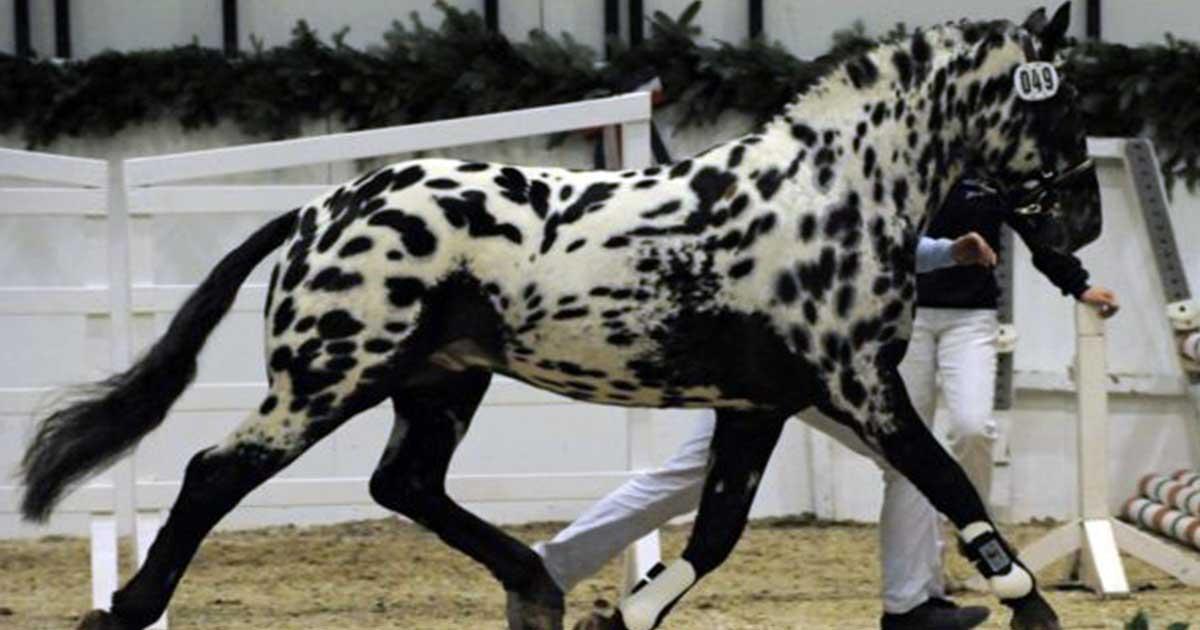 Tα 8 πιο όμορφα και σπάνια άλογα του κόσμο