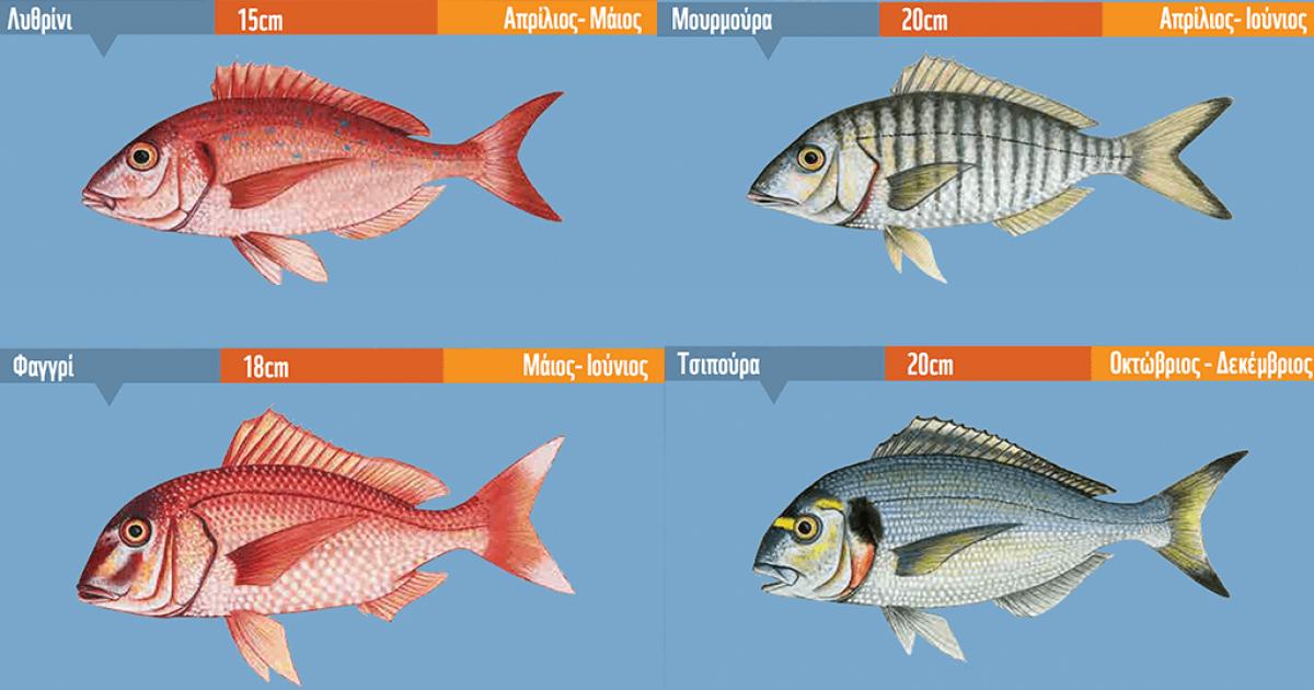 Πότε πρέπει να τρώμε και να διαλέγουμε τα φρέσκια ψάρια