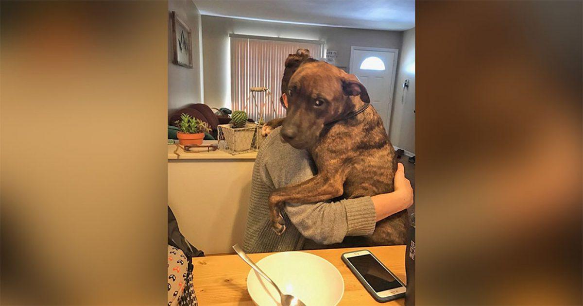 Σκύλος που διασώθηκε πριν από έναν χρόνο δεν σταματάει να αγκαλιάζει την ιδιοκτήτριά του κάθε μέρα