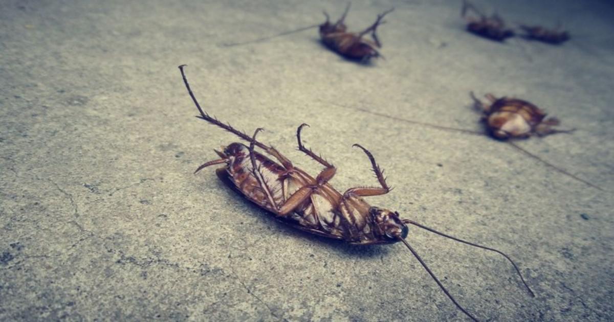 Πώς θα απαλλαγείτε από τις κατσαρίδες;