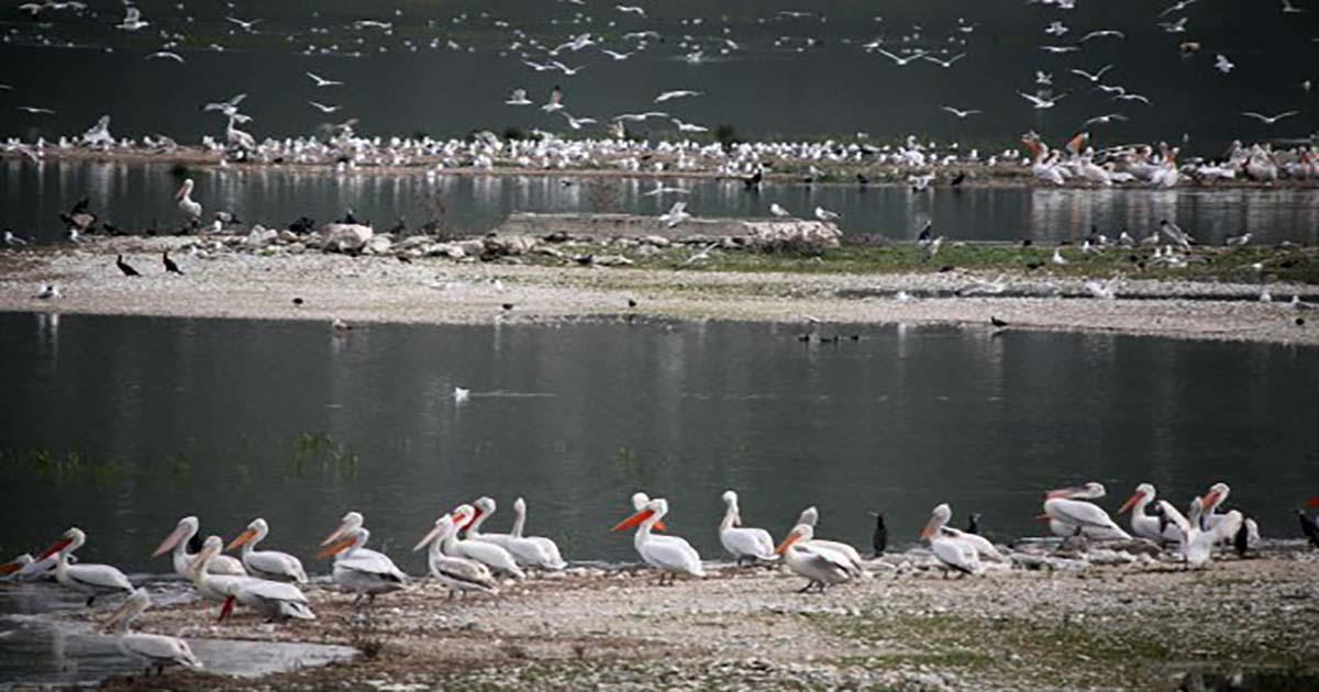 Μαγικές εικόνες στη λίμνη Κάρλα της Λάρισας