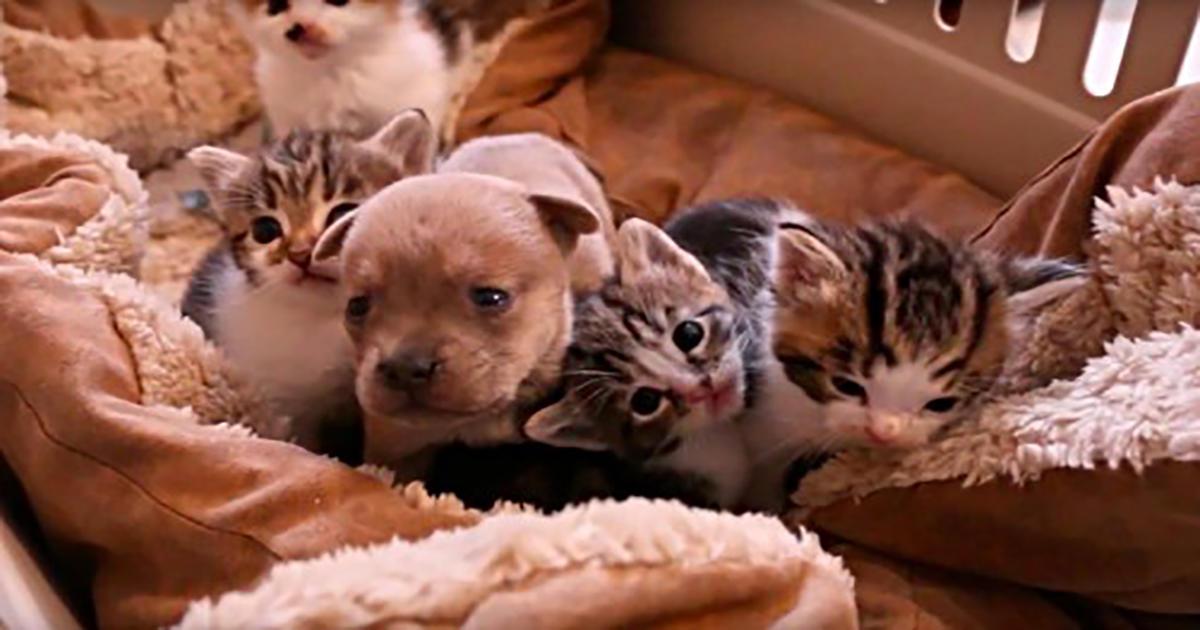 Ένα ορφανό κουτάβι δύο ημερών βρήκε καινούργια οικογένεια με μαμά και αδέλφια γάτες