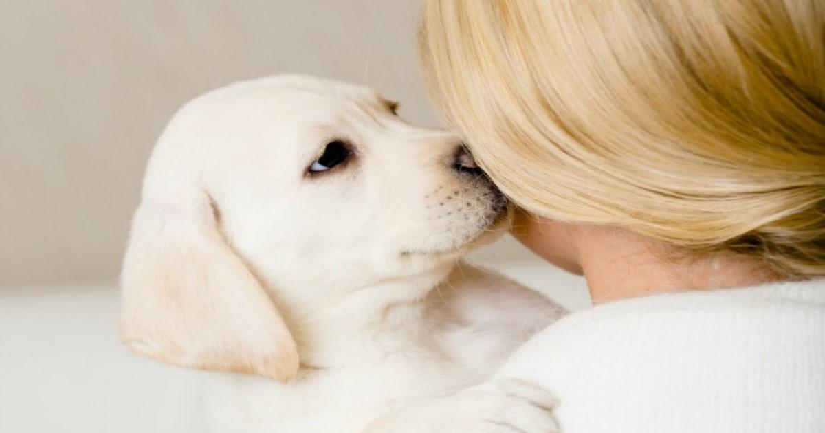 12 αδιάψευστα σημάδια που μαρτυρούν ότι το σκυλάκι έχει γίνει το παιδάκι σας…