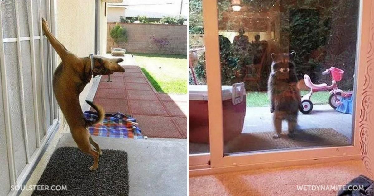 25 αξιολάτρευτα ζώα που δεν βλέπουν την ώρα να μπουν μέσα