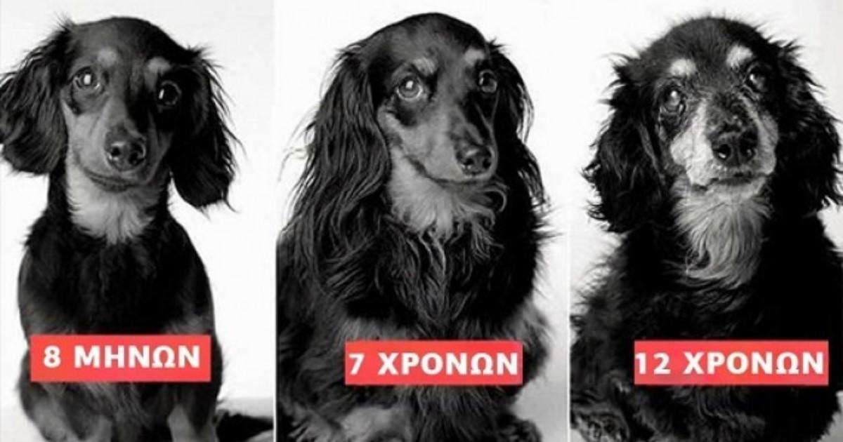 Υπέροχες φωτογραφίες σκύλων από την μικρή τους ηλικία μέχρι τα βαθιά τους γεράματα