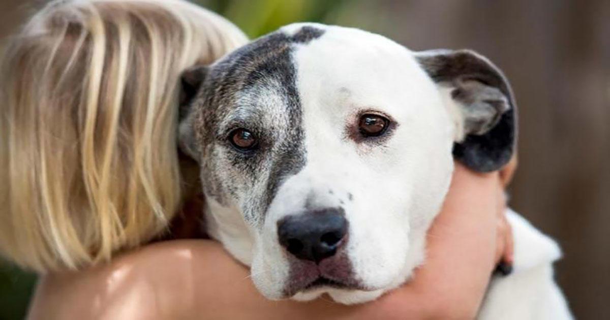 Οι επιστήμονες προειδοποιούν – Μην αγκαλιάζετε το σκύλο σας!