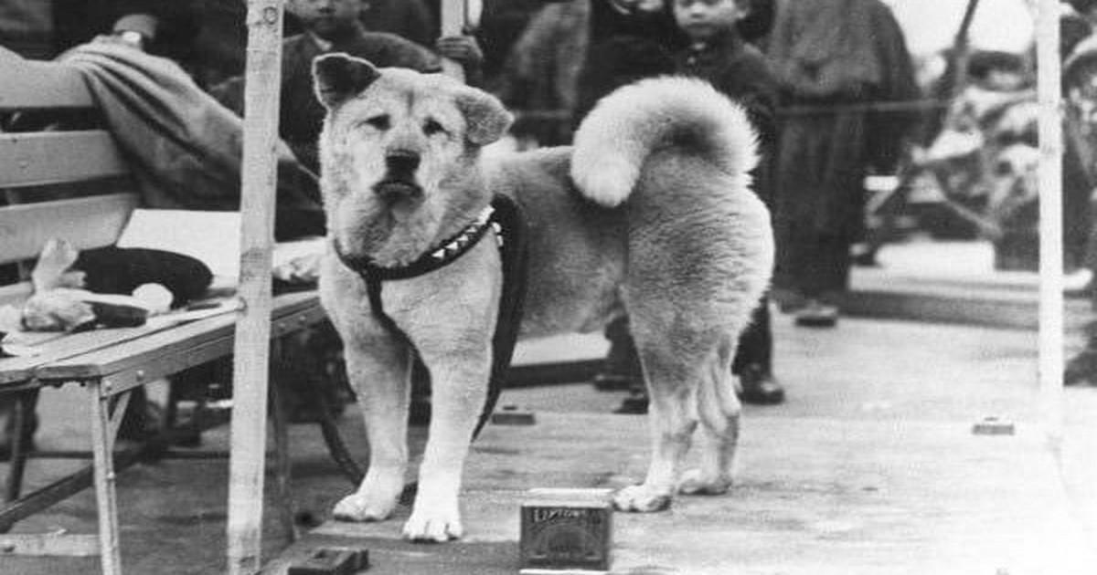 Χάτσικο, ο πιο πιστός σκύλος του κόσμου.