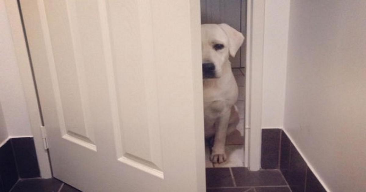 13 αλήθειες που οφείλουμε να παραδεχτούμε όλοι όσοι έχουμε σκύλους!