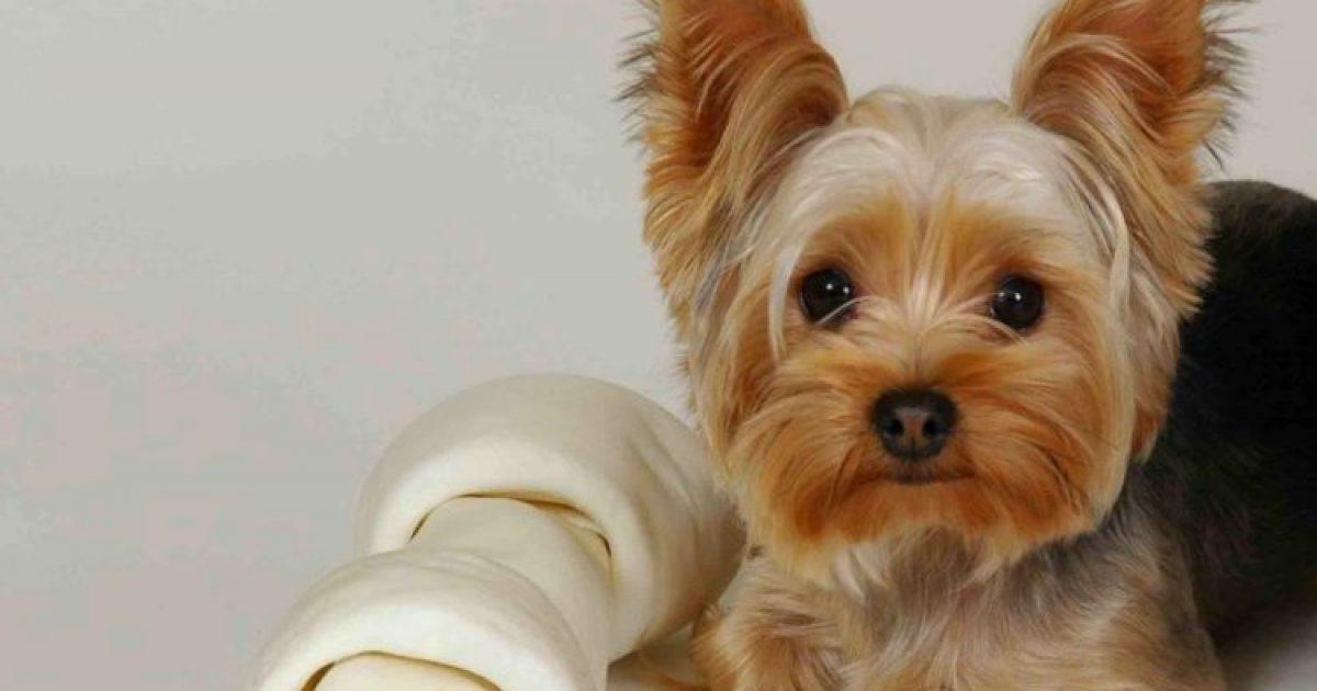 Αν δεν έχεις ζήσει με σκύλο, δεν έχεις καταλάβει τι θα πει ανιδιοτελής αγάπη..