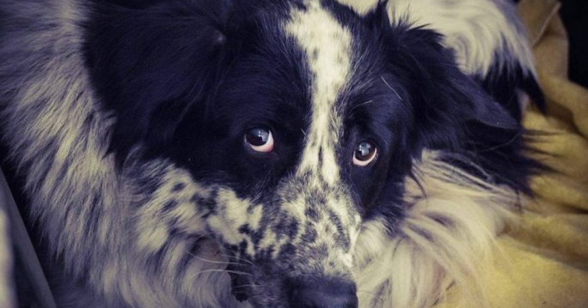 Υιοθετήθηκε ο σκύλος που έζησε έγκλειστος 4 χρόνια σε σπίτι και στο απόλυτο σκοτάδι