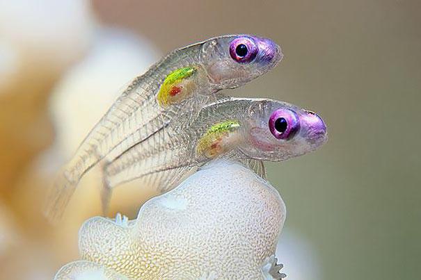 image 50c4 - 30 διαφανή ζώα που είναι δύσκολο να πιστέψουμε πως υπάρχουν