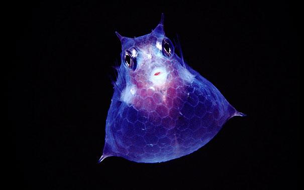 image 7004 - 30 διαφανή ζώα που είναι δύσκολο να πιστέψουμε πως υπάρχουν