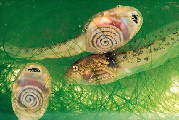 image 7ce9 - 30 διαφανή ζώα που είναι δύσκολο να πιστέψουμε πως υπάρχουν