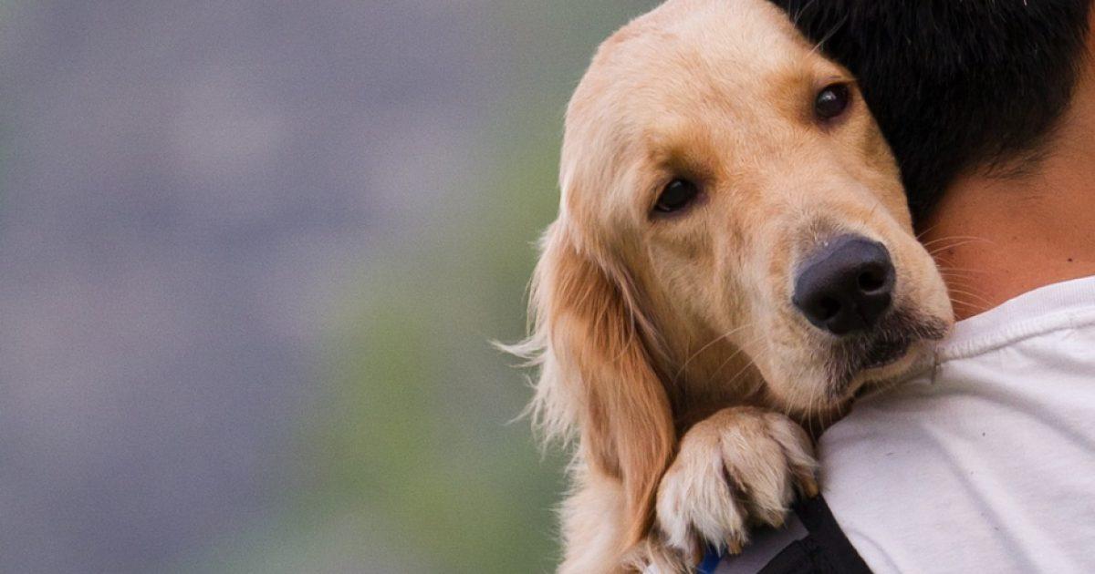 Σήμερα ξέρω, πως αν δεν έχεις ζήσει με ένα σκύλο, δεν έχεις καταλάβει τι θα πει γενναιόδωρη αγάπη..
